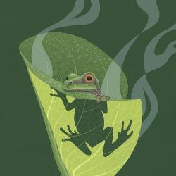 Pacific Tree Frog - Fine Art